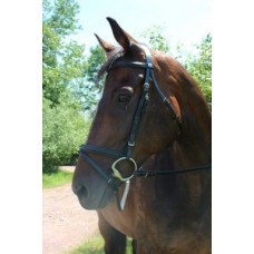 HDR Pro Collection padded dressage bridle