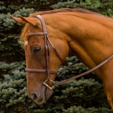 HDR Pro monocrown fancy padded raised hunt bridle
