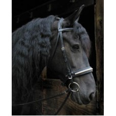 SW Signature clincher nose draft horse dressage bridle