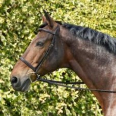 Bobby's 1101 Silver Spur stitched raised monocrown bridle