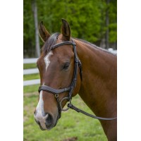 HDR Pro anatomical bridle