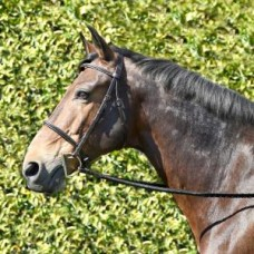 Bobby's #161 braided-front hunt bridle